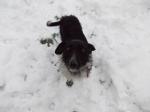 neve-nel-bosco-di-castronno