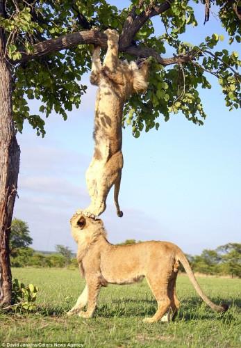 lion_tree