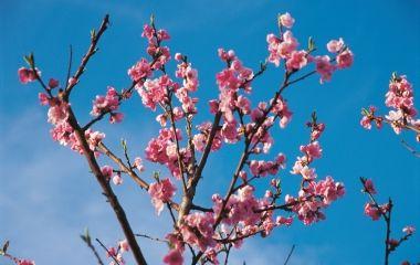 Primavera in arrivo contento o no messaggero dei ragazzi for Fiori che sbocciano